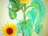 sunflower_amogis_2005_watercolor